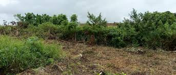 virgin Acres of land in ikorodu for sale