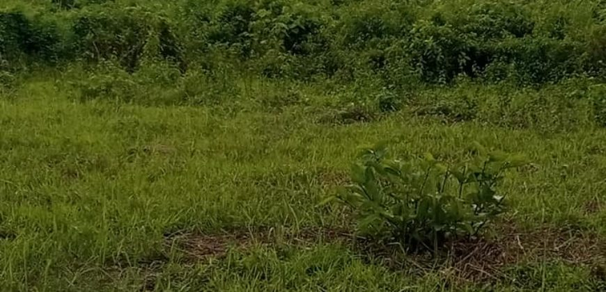 AWKA LANDS FOR SALE IN AWKA ANAMBRA STATE.
