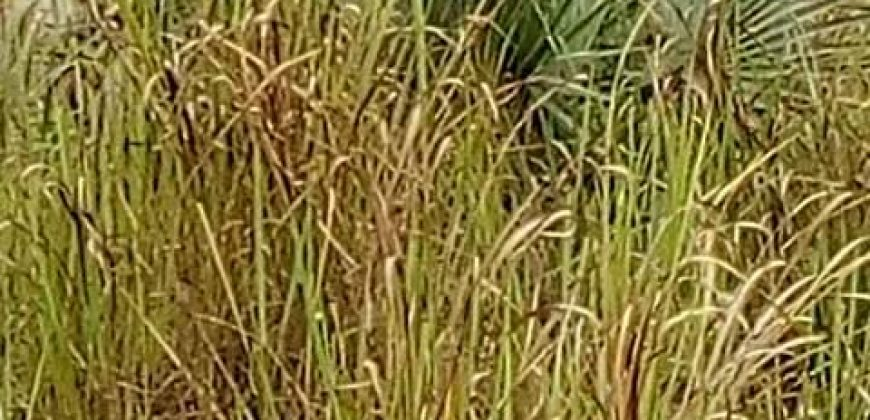 land for sale in urum Awka